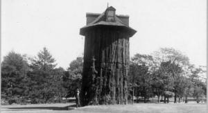 The Not-So-Magic Tree House